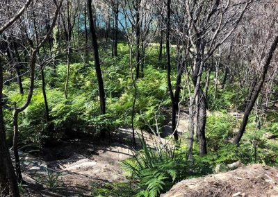Bushland Track Upgrade at Two Creek Track Waterfall