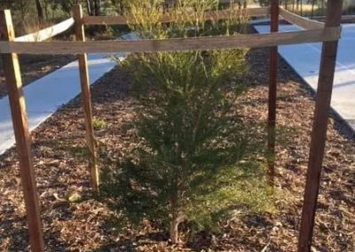 Five Million Trees for a Greener Sydney 2030