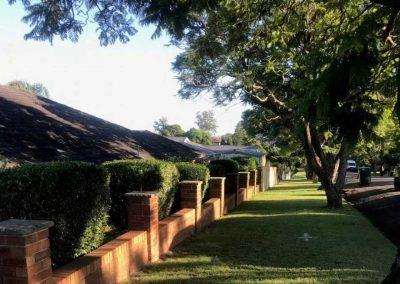 Saving Heritage Jacaranda Trees