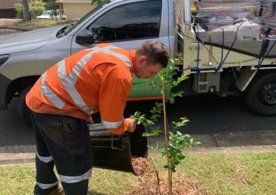 Greening the Shire of Hornsby